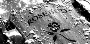 """O """"rosebud"""" procurado..."""